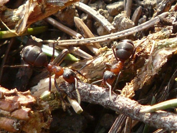 Lessons from Strange Places: Ants